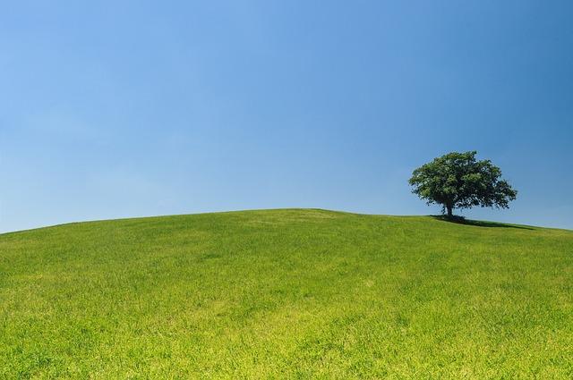 Trawnik przycięty kosą spalinową od firmy BMK Rzeszów